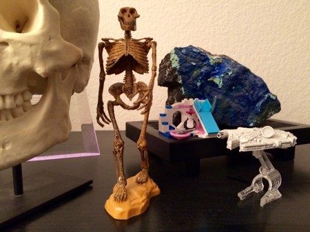 { A. afarensis along with some other prized possessions. }