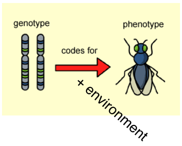 Genotype to Phenotype