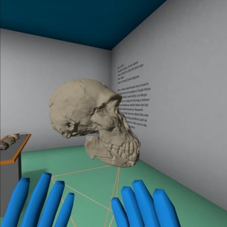 Blown-up model of Homo naledi
