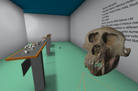 { Caption: Rhesus monkey skull in the holo projector. }
